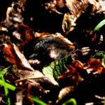 おすすめのモグラの捕獲器や使い方について