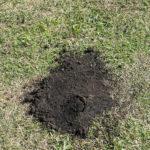 もぐらによる庭に被害や対策法について