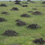 芝生のモグラ駆除対策法について