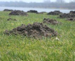 モグラ 畑 被害