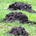 モグラが土を掘るスピードはどのくらいなの!?