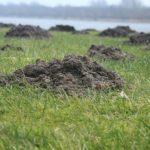 家の庭へのモグラの被害と土について