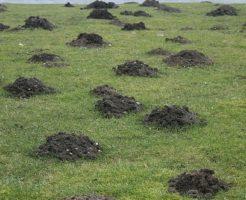 もぐら 芝生 対策