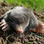 モグラはなぜ土の中に潜って生活しているの!?